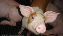 台灣首例新型豬流感H1N2v 養豬場人家5歲女童確診