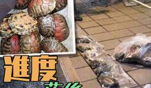 政府擬修例列明放生落毒屬虐待動物 議員轟處理龜速