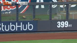 管你什麼比賽 洋基球場有貓就先給讚 【珍奇場面】20210803