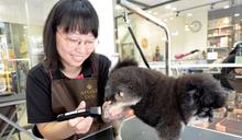 7年級會計轉行寵物美容師 勞動部貸款助創業圓夢