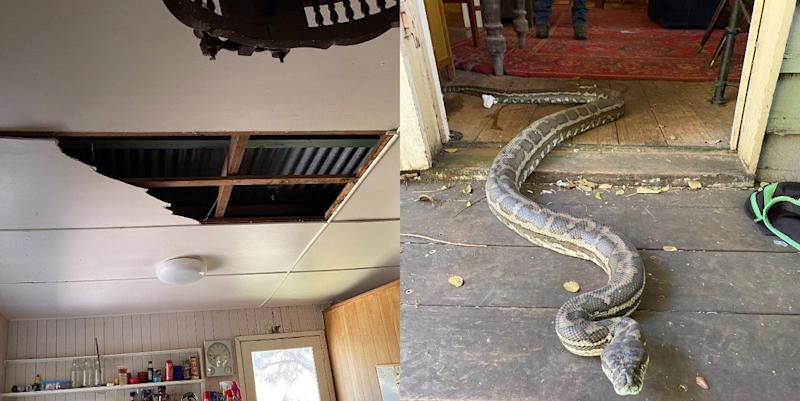 Photo credit: Brisbane North Snake Catchers and Relocation - Facebook