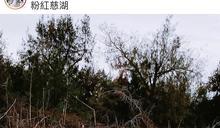 IG紅什麼/台版粉紅色湖泊超夢幻