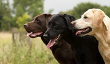 【Yahoo論壇/呂建和】咪咪、嚨嚨、小紅,關於三隻狗狗在軍中的故事