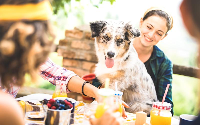 Dog owners not only believe the universe revolves around their pets but, also, that we all want to share in their puppy love - getty