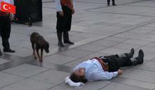 街頭藝人表演中途忽倒地 暖心浪犬立即上前營救:你快醒醒!