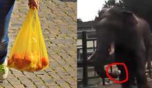 太離譜!遊客動物園偷丟「塑膠袋」餵大象 畫面曝網怒了