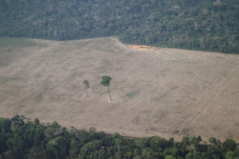 Soaring Amazon deforestation splits Brazil's agriculture lobby