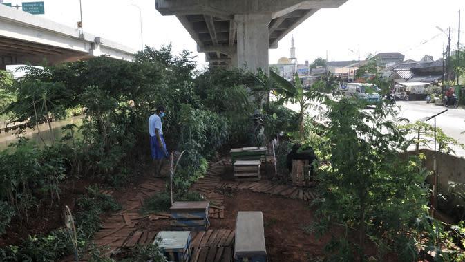 Pungki (53) memeriksa tanaman perkebunan di kolong Tol Becakayu, Kalimalang, Jakarta, Kamis (4/6/2020). Selain tanaman, kebun yang berada di pinggir Kalimalang ini dihiasi bangku santai dan pot-pot yang terbuat dari barang bekas. (merdeka.com/Iqbal S. Nugroho)