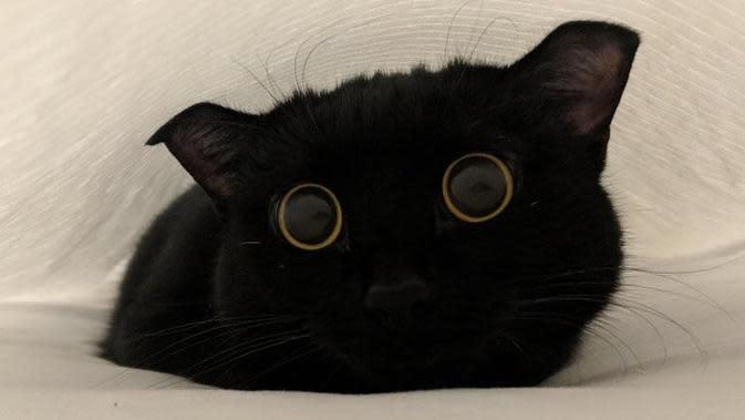 Potret lucu kucing membuat tersenyum