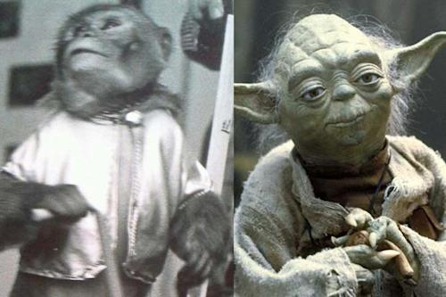 'Star Wars' Fun Fact: Yoda Was Almost Played By This Monkey (Photos)