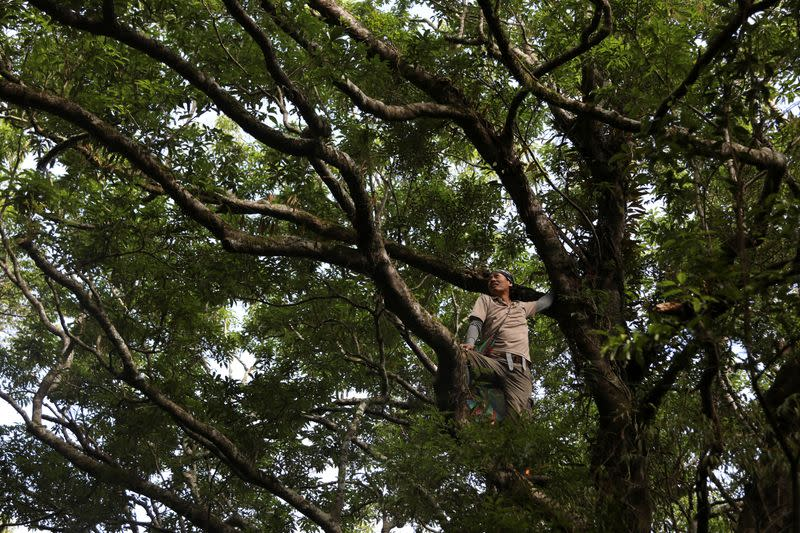 Taiwan plant hunters race to collect rare species before they're gone