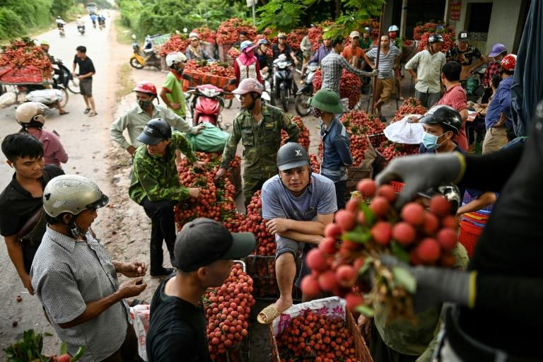 Vietnam usually exports 100,000 tonnes of fresh lychees worth more than $30 million -- mostly to China but to Japan, Australia and the US