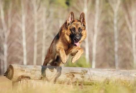The 10 Easiest Dog Breeds to Train