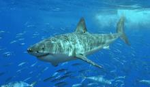夏威夷鯊魚吃人 衝浪比賽緊急叫停