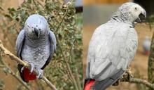 動物園5隻鸚鵡「互相交流罵髒話」!見遊客開始狂譙 園方緊急分籠飼養