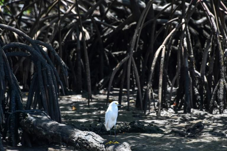 Brazil revokes mangrove protections, triggering alarm