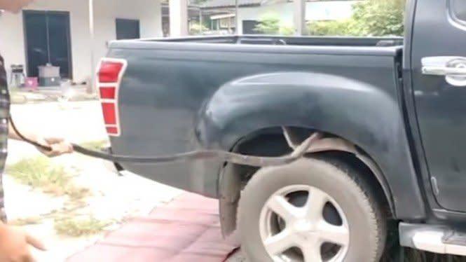 Evakuasi Ular King Cobra 2,5 Meter dari Mesin Mobil Nyaris Menggigit