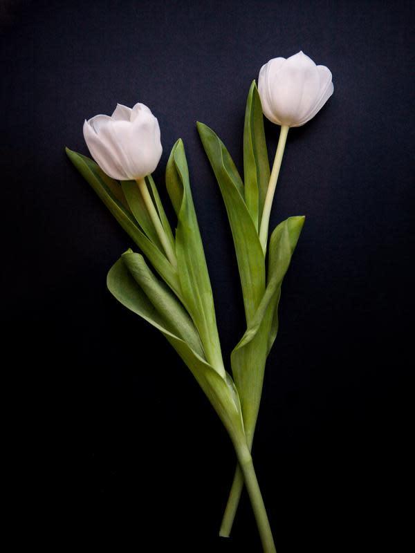 Bunga tulip. (dok. Louise Pilgaard/Unsplash/Adhita Diansyavira)