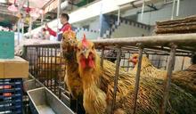 烏克蘭頓涅茨克州爆H5N8禽流感 港停止進口禽類產品