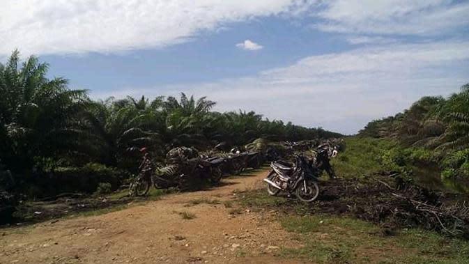 Pemandangan kebun kelapa sawit di salah satu desa di Kabupaten Nagan Raya (Liputan6.com/Rino Abonita)