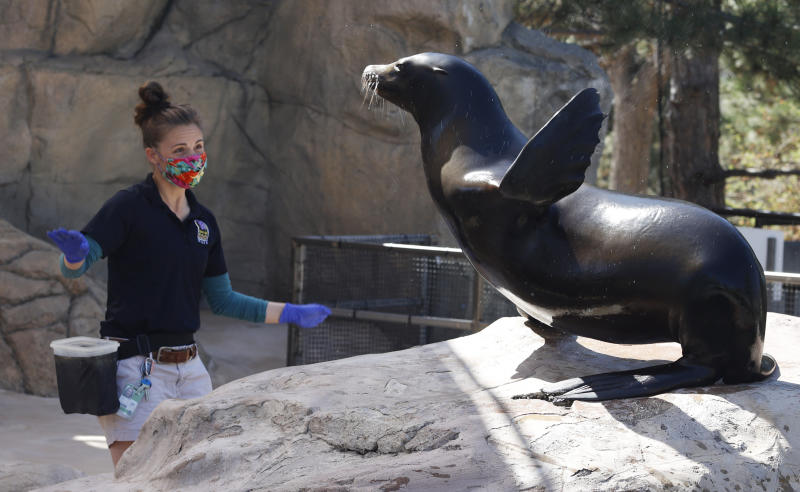 Keeper Carla Cutino works with Ady the sea lion at the Denver Zoo Tuesday, April 21, 2020, in Denver. The zoo has been closed to the public because of the new coronavirus since March 17. (AP Photo/David Zalubowski)