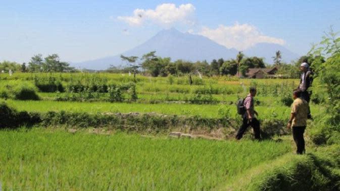 2 Benda Cagar Budaya di Area Persawahan Klaten Hilang Misterius