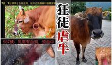 虐畜狂魔猛刺頸動脈及生殖器 梅窩黃牛1死4傷