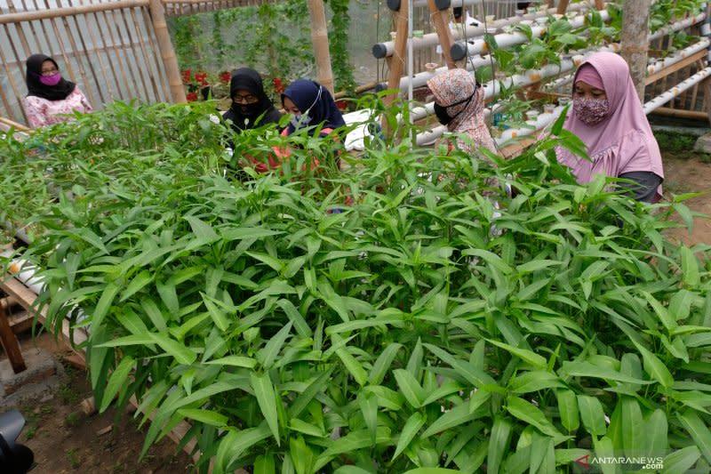 Borosnya pangan di Indonesia dan anjloknya daya saing bangsa