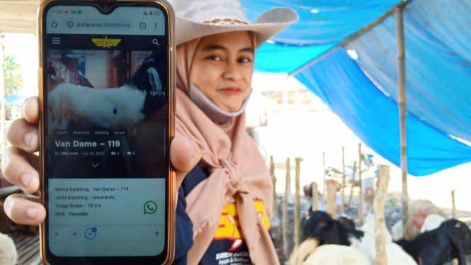 Laris Manis, Penjual Kambing Qurban Manfaatkan SPG dan Website