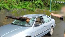樹幹刺破玻璃穿入車 孕駕駛輕微擦傷