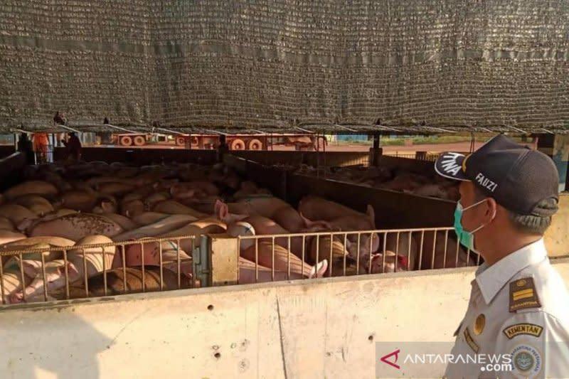 Flu babi, Kementan mitigasi risiko lalu lintas hewan sejak Maret 2020