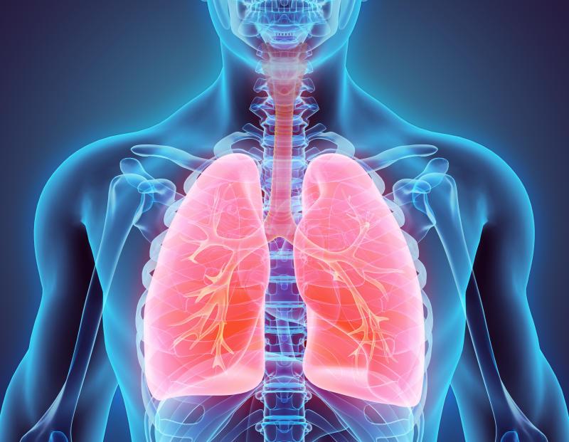 Illustration 3D des poumons - Partie de l'organique humain.