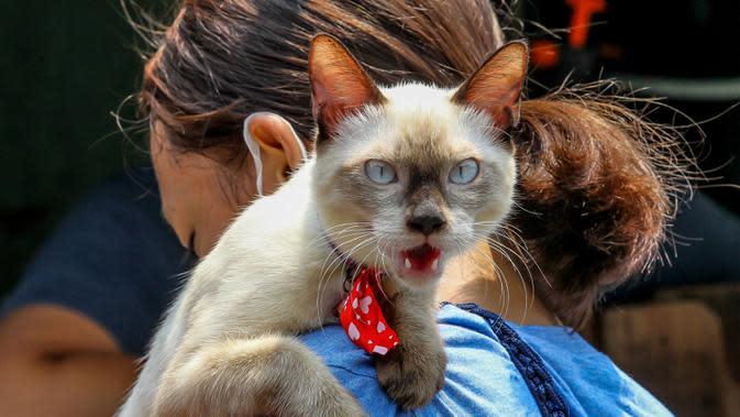 Seorang wanita membawa kucing peliharaannya menunggu vaksinasi rabies gratis di Manila, Filipina, pada 28 September 2020. Hari Rabies Sedunia diperingati tiap 28 September untuk menyebarkan kesadaran akan pencegahan rabies pada hewan peliharaan. (Xinhua/Rouelle Umali)