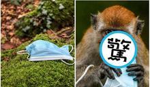【圖多】挽救人命口罩釀生態浩劫 「獼猴母子搶吞」畫面超衝擊