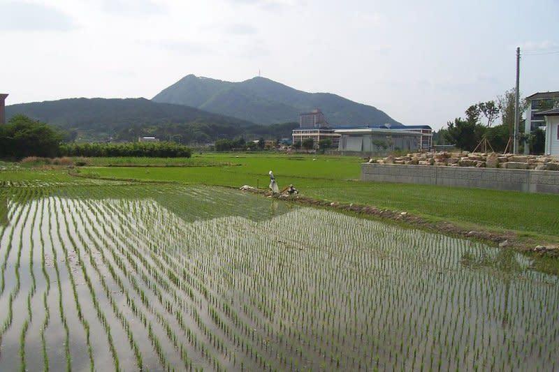 Peneliti: Pembenahan beras cadangan perlu evaluasi HPP