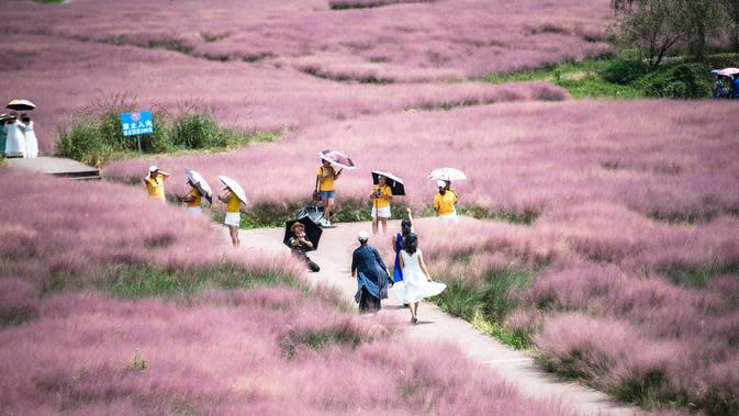 Wisatawan menikmati pemandangan di sebuah padang rumput berwarna pink (Muhlenbergia capillaris) di objek wisata Shenquangu di Wilayah Changshun, Provinsi Guizhou, China barat daya (2/9/2020). (Xinhua/Tao Liang)