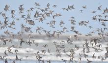 新竹市濱海野生動物保護區成立20週年 暖身