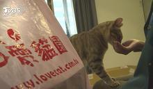 「愛貓園」網站遭駭 假客服詐15萬客戶喊告
