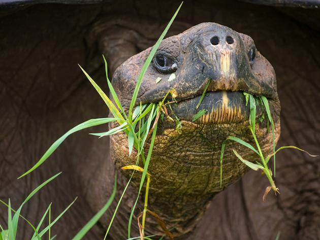 Flickr photo of the day: Of time and the tortoise