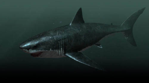 Megalodon: Is It Possible That This Nearly 67-Foot Shark Still Exists Off the Coast of South Africa?