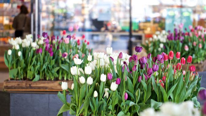 Sejumlah pot bunga tulip terlihat di stasiun sentral di Amsterdam, Belanda (8/4/2020). Festival Tulip Amsterdam 2020 menampilkan tulip di jalan-jalan sepanjang bulan April. Akibat epidemi COVID-19, beberapa lokasi pameran tulip ditutup tahun ini. (Xinhua/Sylvia Lederer)