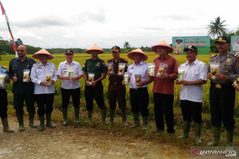 FAO-Kementan gandeng petani perbatasan Kalbar produksi beras sehat