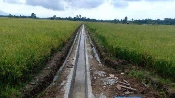 Produktivitas di Trangkil Pati Naik jadi 8 Ton/Ha Berkat RJIT Kementan