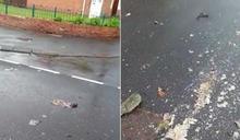 暴雨侵襲!英國下水道淹水 「老鼠屍體滿地」超嚇人