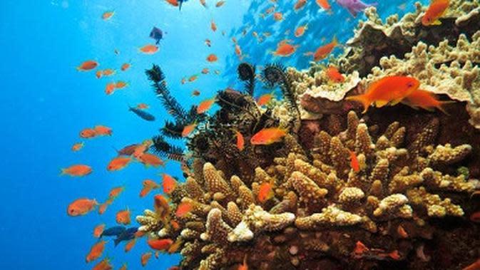 ilustrasi terumbu karang. (iStockphoto)