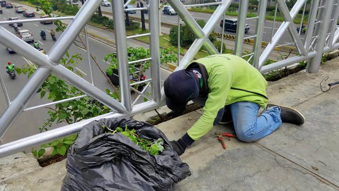 Petugas memperbaiki tanaman di JPO tanpa atap di Jalan Sudirman, Jakarta Rabu (6/11/2019). (Liputan6.com/ Rizki Putra Aslendra)
