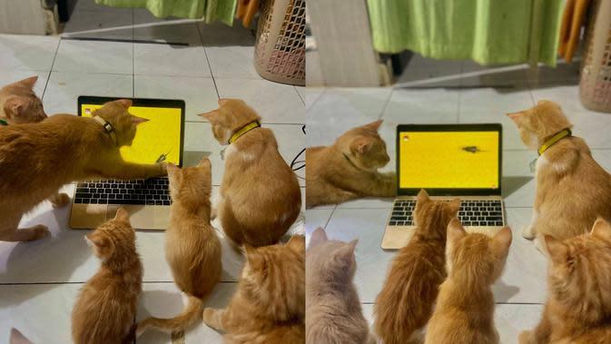 Gemas Banget, 8 Potret Tingkah Lucu Kucing Nonton Bareng Temannya