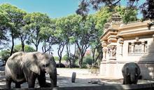 阿根廷關閉動物園後 轉型的漫漫長路