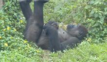 大金剛迪亞哥順利當爸 小寶寶跟母「黏踢踢」