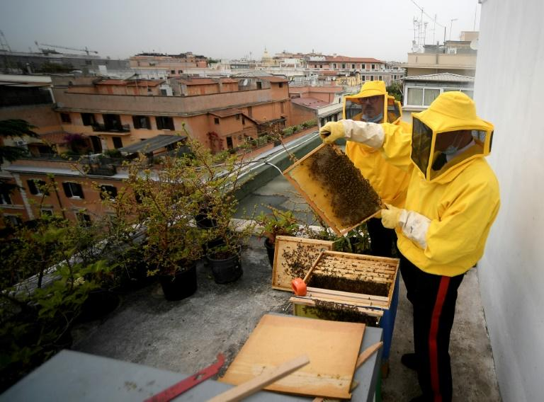 The bee-studying project includes about 30 other groups in Italy's capital sharing information about their bees